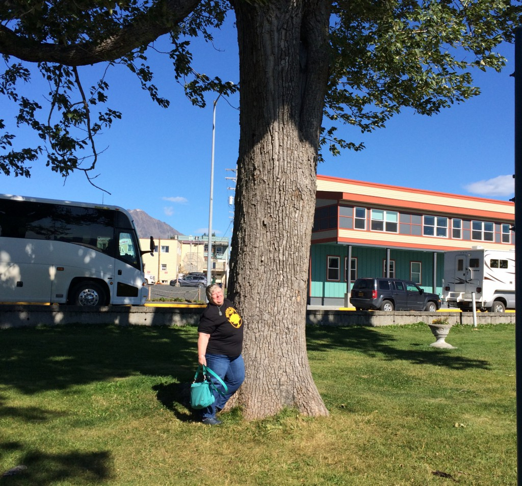 Anne Young: New t-shirt with a cottonwood in Seward, Alaska. Historical photos show this tree in place by 1941. May have been there at city founding in 1903.